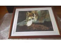 Wolf Picture / Print