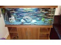 4ft aquarium with stand full set up