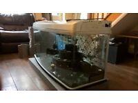 Fish Tank - 380 Litres