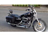 Stunning 1200 Harley Davidson Sportster.
