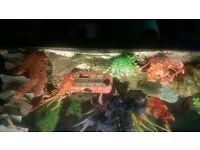 fish tank 2foot long