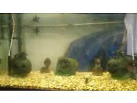 Full tropical setup 180 litre jewel aquarium