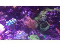 maxspec razor 120 watt reef tank light