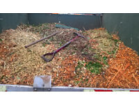 Free mulch/woodchips, Chelmsford area