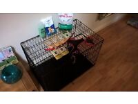 Puppy/dog starter kit! Includes medium size crate, collars, lead, various food, dog shampoo and more