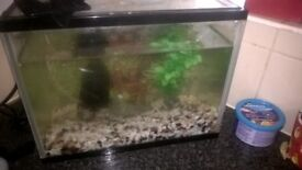 guppy fish and tank
