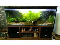 Four foot fish tank with unit