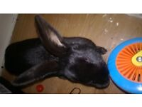help to rehome our family rabbit