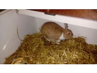 Female rabbit free to a good home