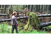 Acorn Wood Services (tree surgery & forestry)