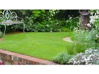 Gardener - fencer -turfing - hedge trimming - reasonable Rates