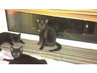 3 Kittens £25