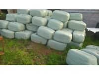 SMALL SQAURE BALE HAYLAGE