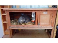 Rabbit with cage for sale.