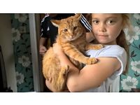 female ginger cat 17 months