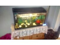 Fish tank with fish and pumps heater lights plus extra stuff