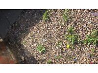 Garden gravle stones