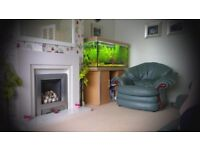 4ft Aquarium with Stand and Light Hood and Dennerle Co2 equipment