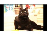 Missing Cat - Black