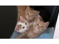 3 beautiful kittens