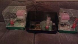 3 Hamsters each one has its own cage etc