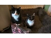 2 kittens ready for new homes now.
