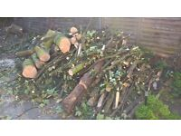 Freshly cut tillia wood logs, suitable for wood working, smoking fish or meat or, as firewood