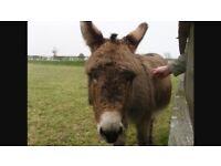 Donkey free to good home