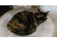LOST CAT in Penenden Heath, Maidstone