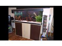 Fluval Roma 240 marine tropical cold fish tank aquarium with setup