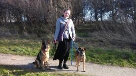 Professional animal carer: dog walking & pet sitting