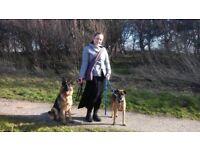 Professional animal carer: dog walking & pet sitting