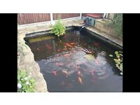 Koi Carp and assorted fish for sale