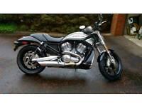 Stunning Harley VROD