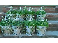 bird cages with pots and plants, perefect for wedding centre pieces