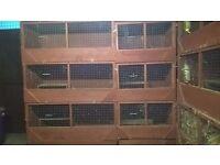 Rabbit/Guinea Pig hutches