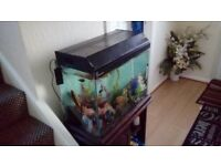 Three diferent fish tanks for sale all come with every tjing in picture and are all ready to leave
