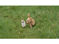 Pet sitting, Dog walking and Small animal boarding in Cambridge - pet care Happy Pets Cambridge
