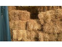 Hay for Sale -2016 -conventional bales- barn stored-£3.00 a bale