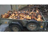 Well seasoned logs for sale