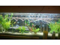 3d aquarium background unique 1 off fish tank cichlid home tropical marine