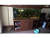 4ft Fish Tank for sale with beautiful mahogany cabinet and lid