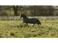 FREE Field Horse manure