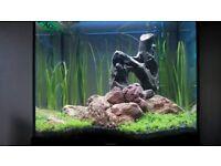 Juwel lido 120 full set up (external filter/heater/new LED light/substrate/rock/wood + more!)
