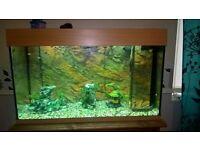 juwel rio fish tank and stand