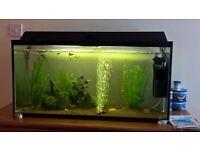 3' aquarium