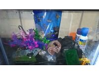 Fish-tank-2-pumps-and-accessories
