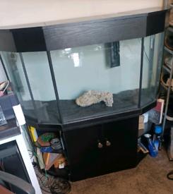 Glass custom built aquarium