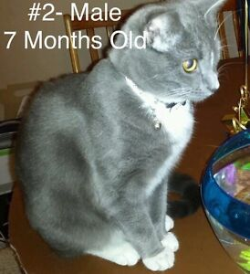 Fur Babies! Spayed/Neutered, Vaccinated, Dewormed! Cambridge Kitchener Area image 2