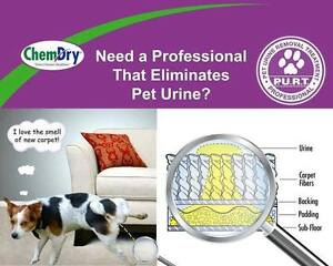 Pet Urine Removal Treatment